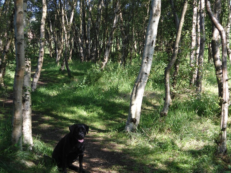 Dog Kennels West Lothian